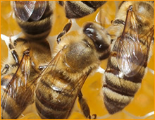 dania beach bee removal