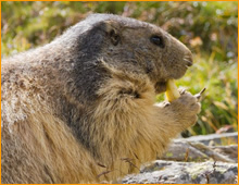 coral gables groundhog removal