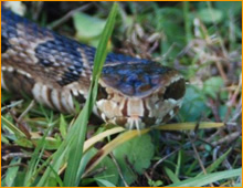 snake control programs in galloway ohio