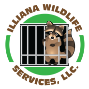 Wildlife removal Goshen, IN.