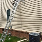 Removing nest from under siding