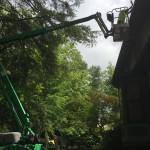 Removing Bird nest from gutter