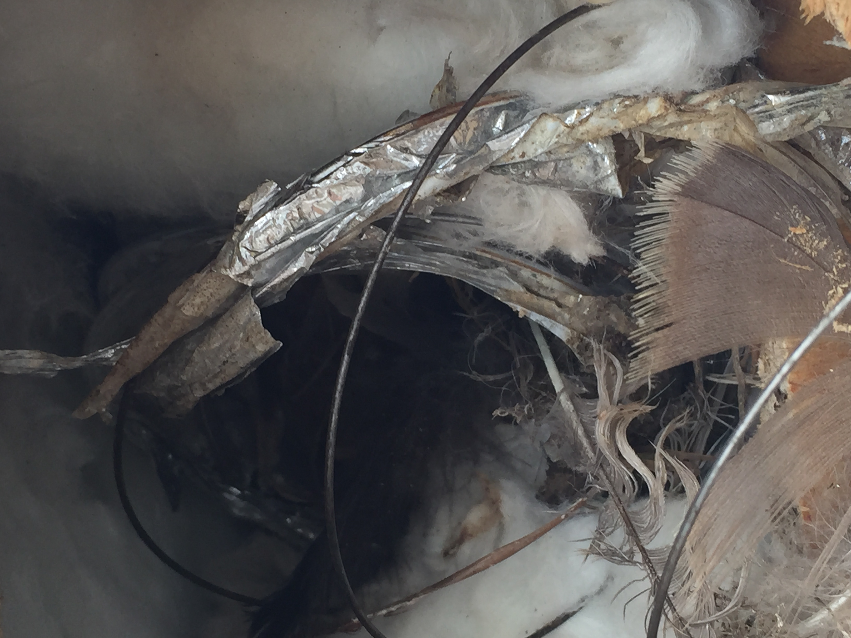 Bird Damage Photos Animal Control Solutions