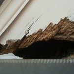 squirrel chewed hole in house