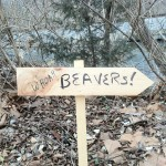 Beaver Control and Trapping