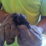 Bat Gallery