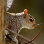 Squirrel Galery