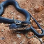 Snake Damage Photos