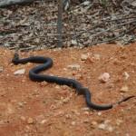 Snake in woods
