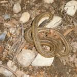 Garter Snake Control