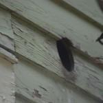 bird in bathroom vent