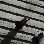 bird flying in vent