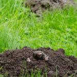 Mole in hole