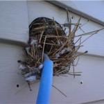 Bird nest clogging up a vent