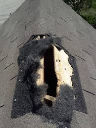 squirrel removal, attic, chimney