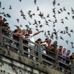 Bats in Houston Texas