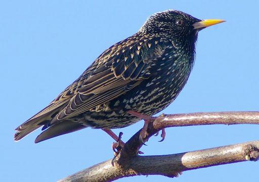 Bird Removal and Control Colorado Springs