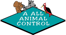 Animal Removal Madison